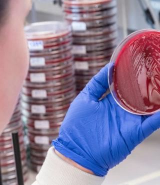 Microbiology Internships