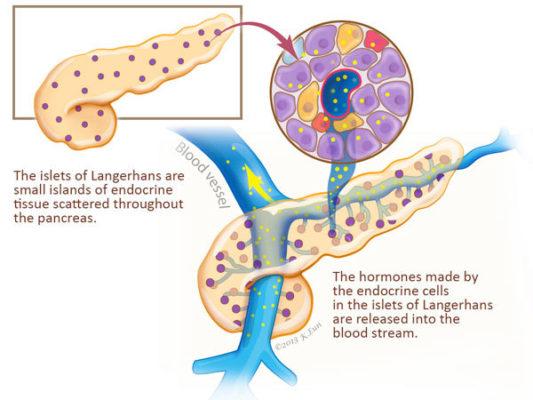 Cancer endocrine pancreatic - Papilloma del gatto